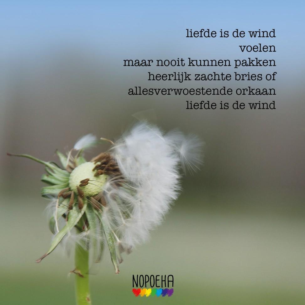 liefde is de wind